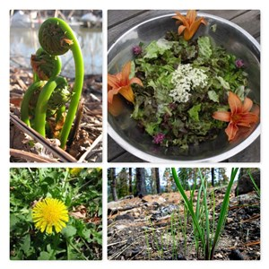 Spring Tonics and Wild Greens + Wild Foods Dinner